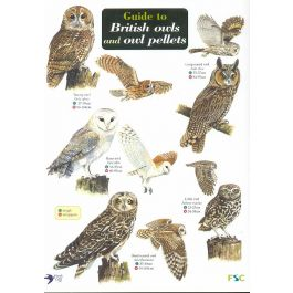 ID Chart - Guide to British Owls