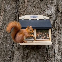 Squirrel Feeder Galiano