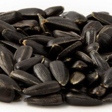 Green+ Black Sunflower Seeds