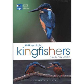 RSPB Spotlight: Kingfishers