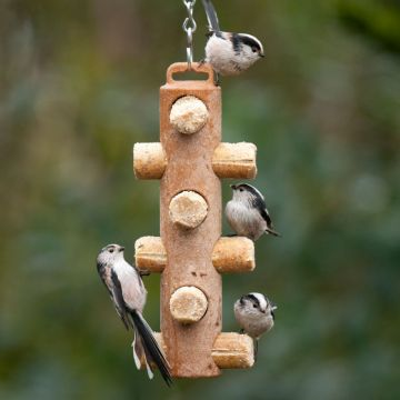 Suet Log Feeder