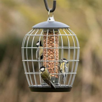 National Trust Aura Peanut Guardian Feeder