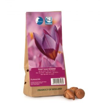 Tulip Lilac Wonder Bulbs - pack of 15