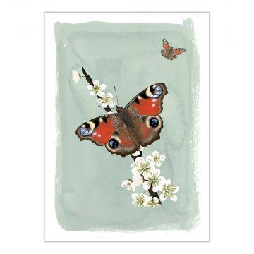 Myrte Peacock Butterfly Card