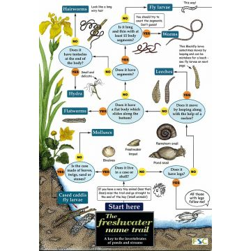 ID Chart - The Freshwater Name Trail