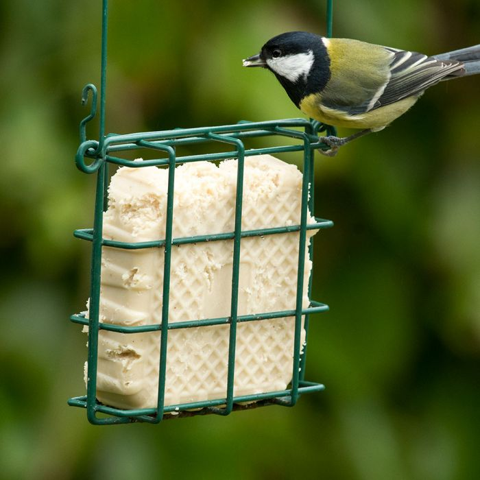 Peanut Cake Square with Mealworms