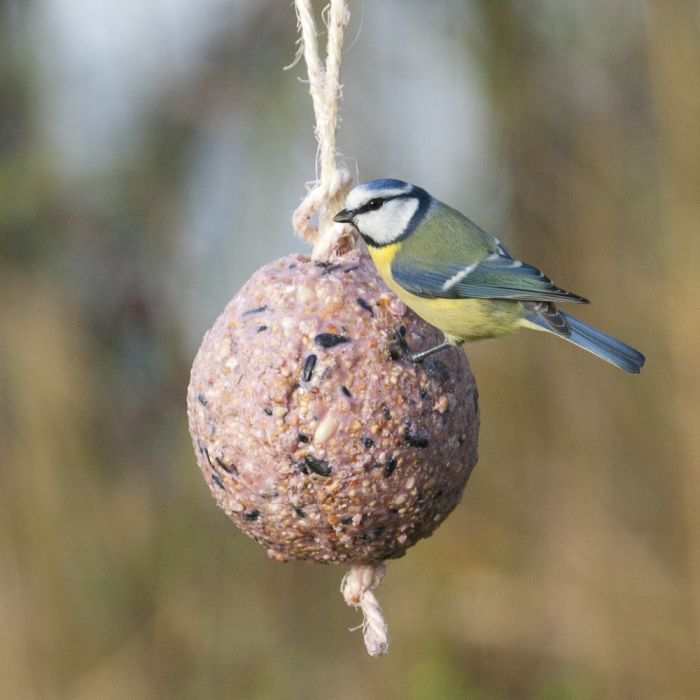 Giant Fat Ball on a Rope - Berries