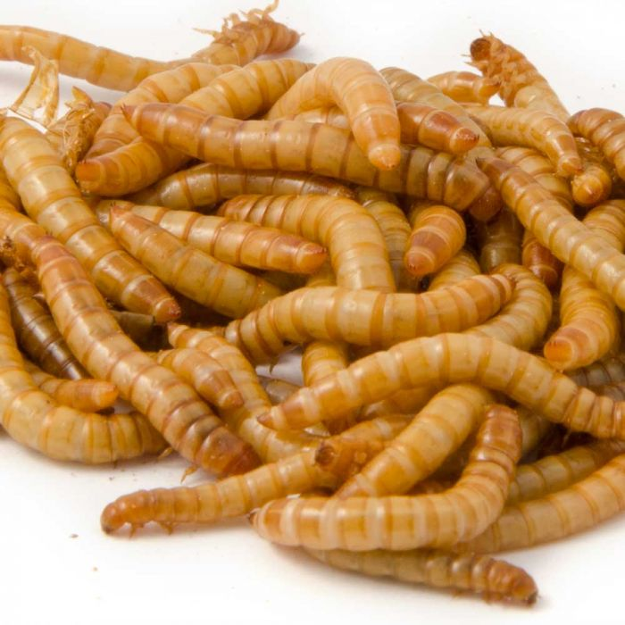 Dried Mealworms (250g)