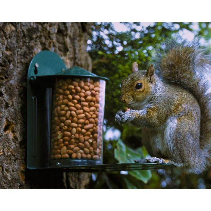 Metal Squirrel Feeder