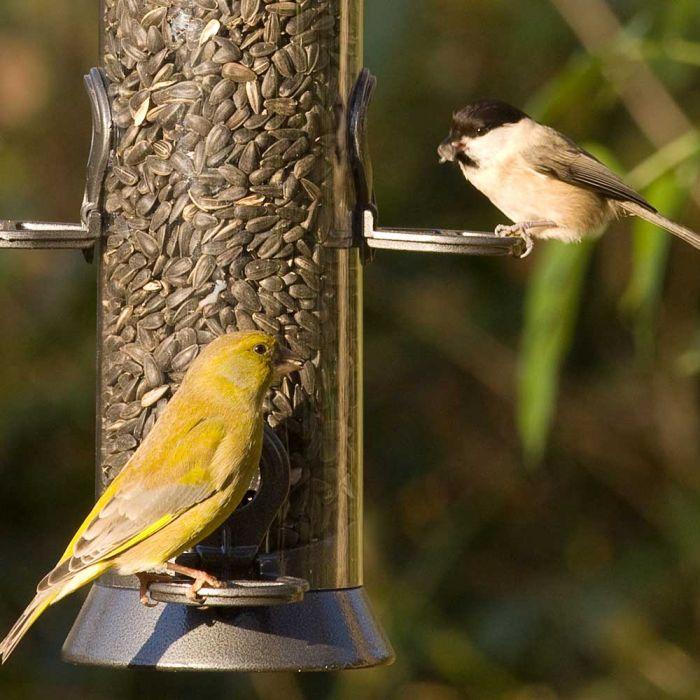Black Sunflower Seeds - Bird Food
