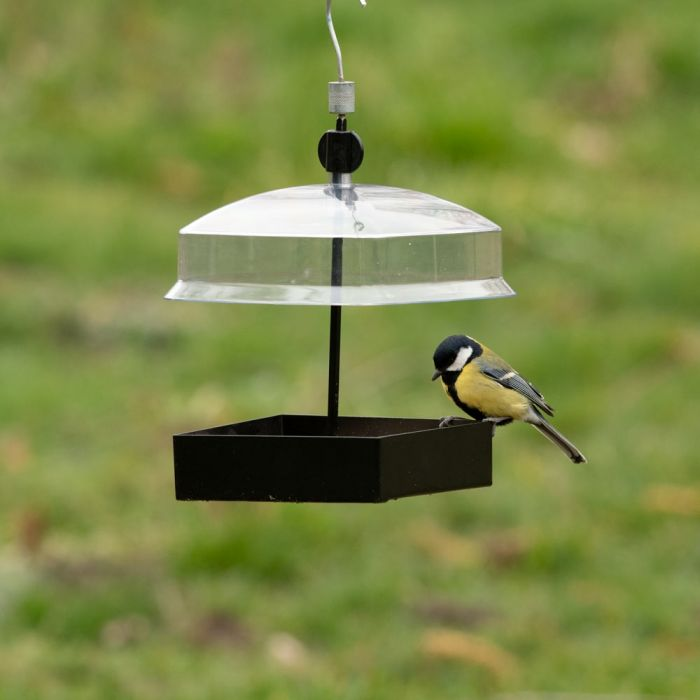 Cairns Seed Feeder