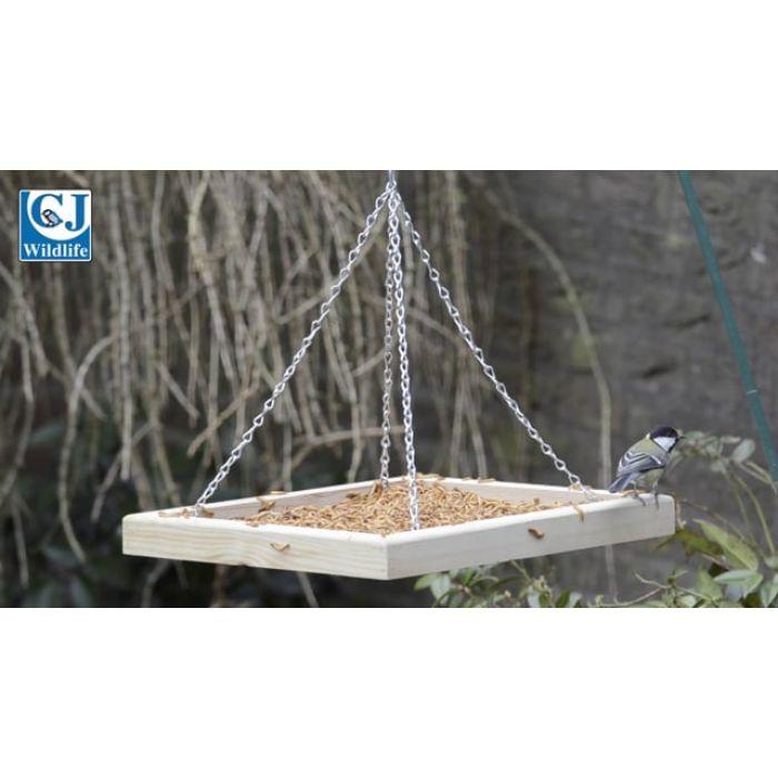 Live Mealworms - Bird Food