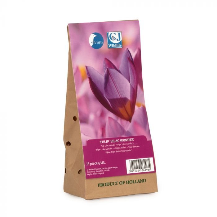 Tulip Lilac Wonder Bulbs - pack of 15