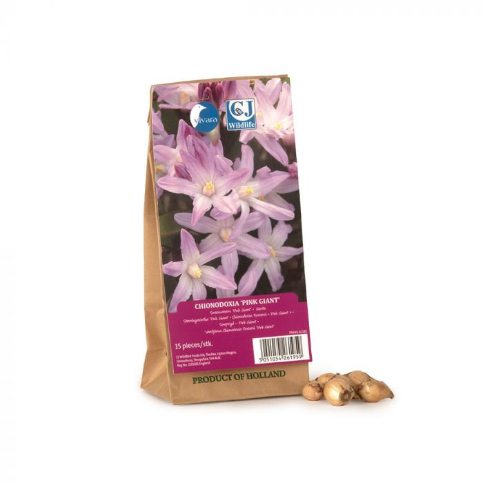 Chionodoxa Forbesii Pink Giant Bulbs - pack of 15