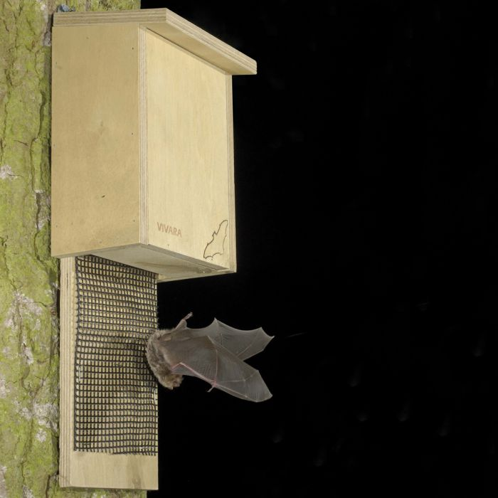 plywood bat box