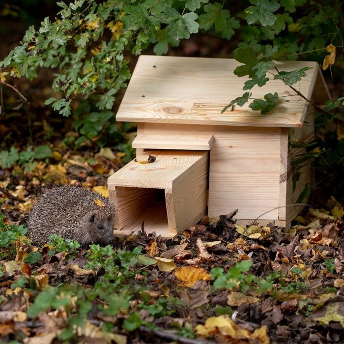 National Trust Hedgehog House Pine