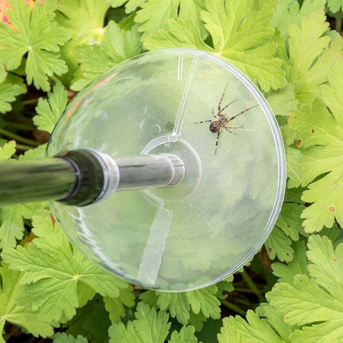 Spider Catcher - BugAway Insect & Spider Catcher