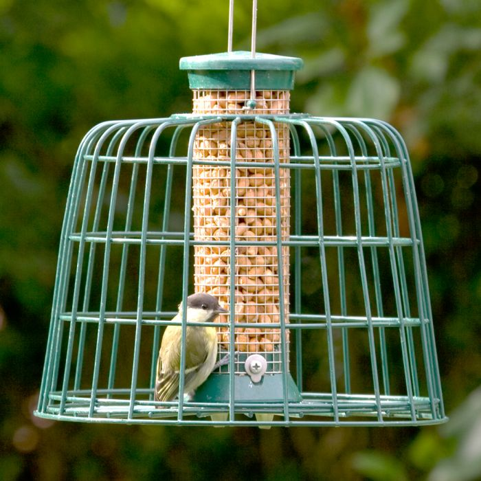 Small Peanut Feeder with Guardian