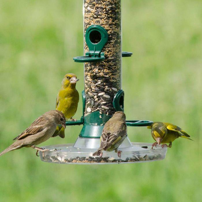 Bird Feeder Seed Mix