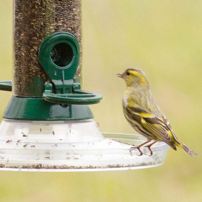 Nyjer Seed - Bird Food