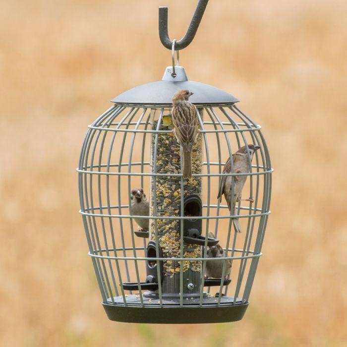 aura seed feeder guardian pack