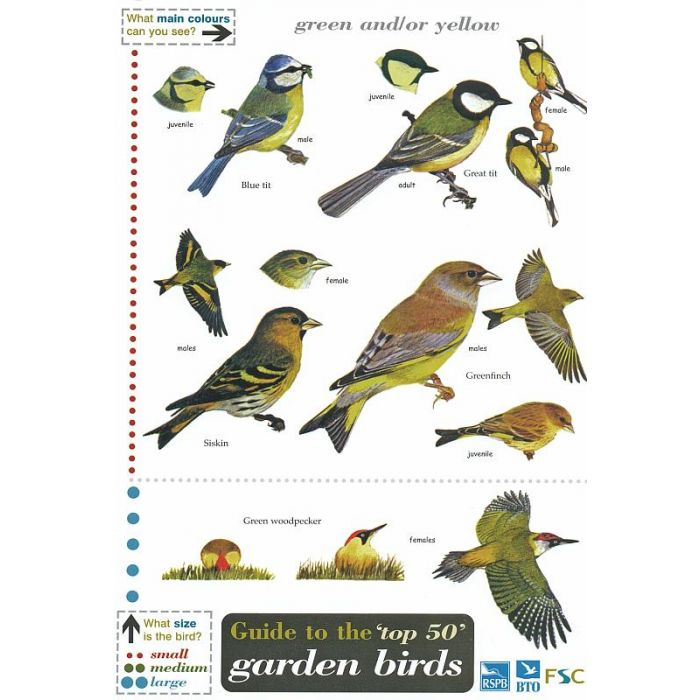 ID Chart - Top 50 Garden Birds