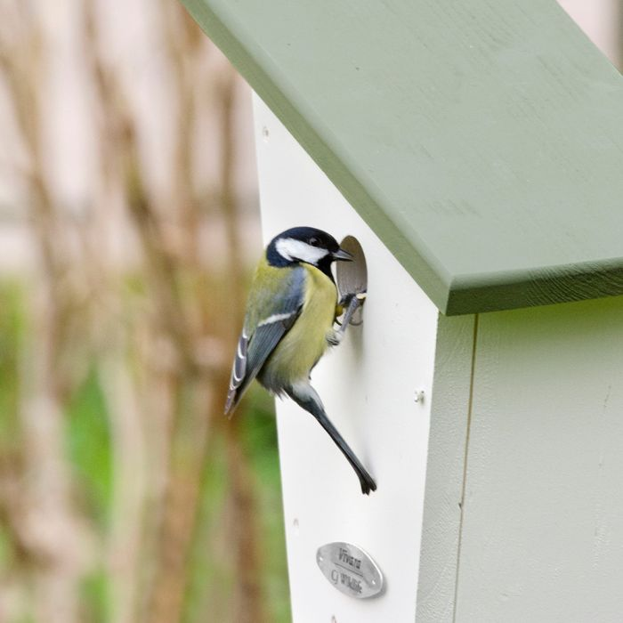 Lausanne Nest Box