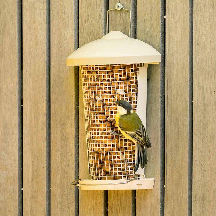 Hios Peanut Bird