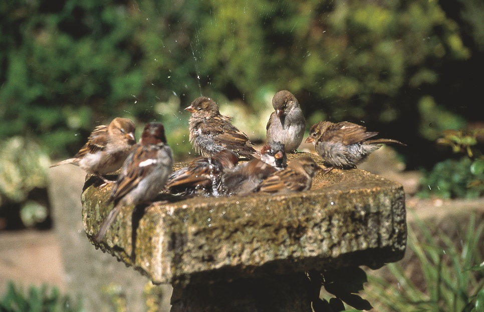 Urban Birder