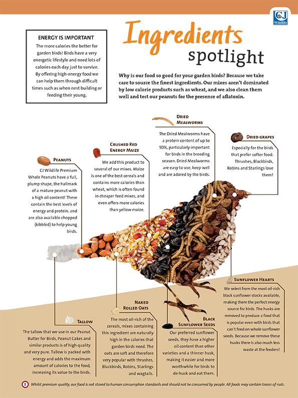 Ingredients Spotlight