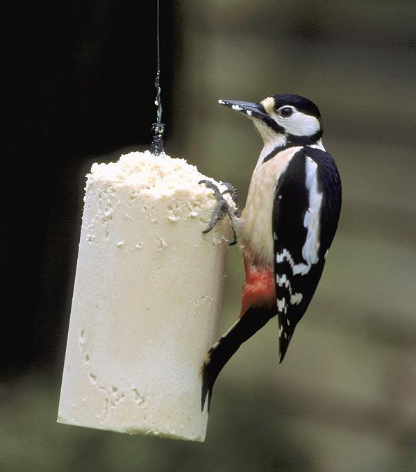 Woodpecker on Peanut Cake Tube