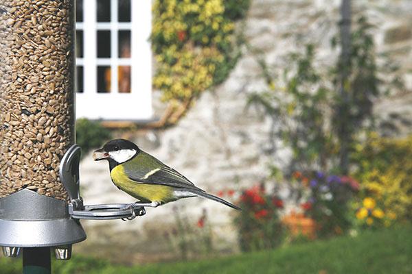 Choosing Bird Feeders