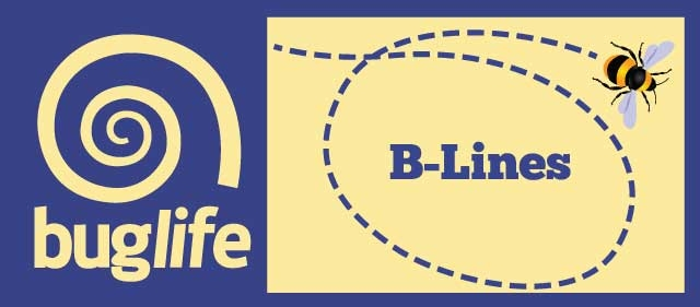 Buglife B-Lines logo