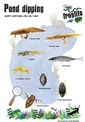 Pond Dipping Guide