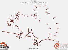 Squirrel Dot to Dot