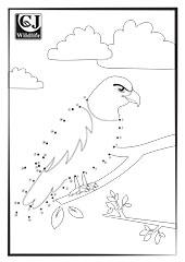Eagle Dot to Dot