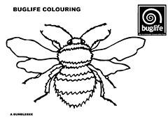 buglife bee