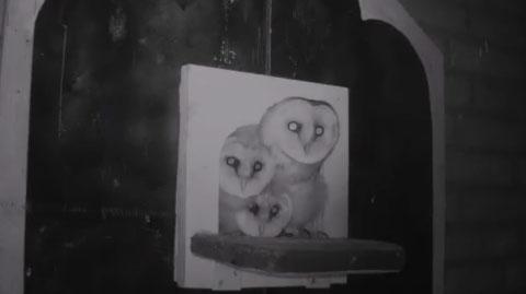 Barn Owl Webcam