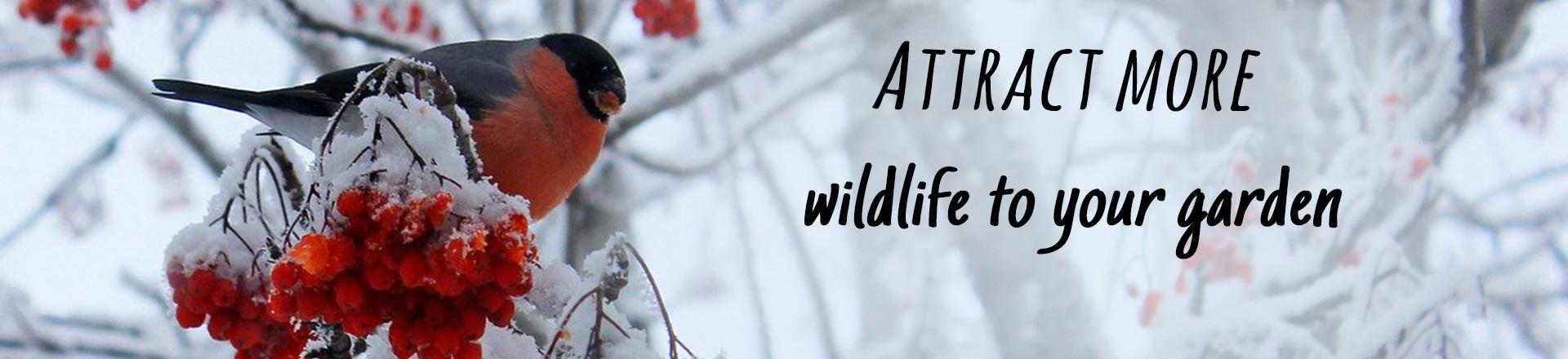 Generic Winter Banner - Bullfinch