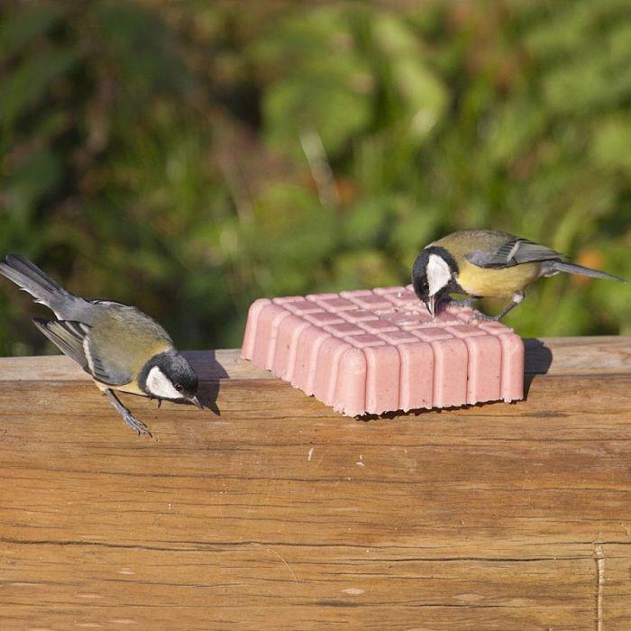 Peanut Cake Square Variety 12 Pack