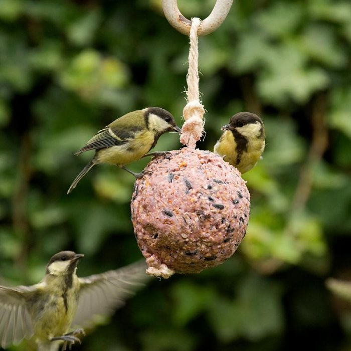 Giant Fat Ball on a Rope - Insects