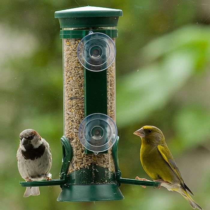Discovery Plastic Window Seed Feeder