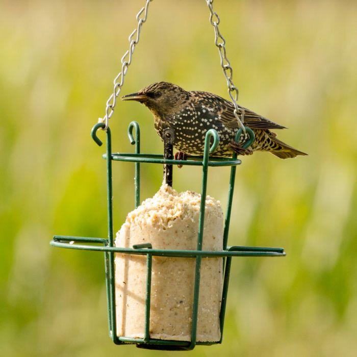 Peanut Cake Tube Hi-Protein Starling Bar (1 Litre)