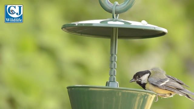 Suet Pellet & Mealworm Bird Feeder