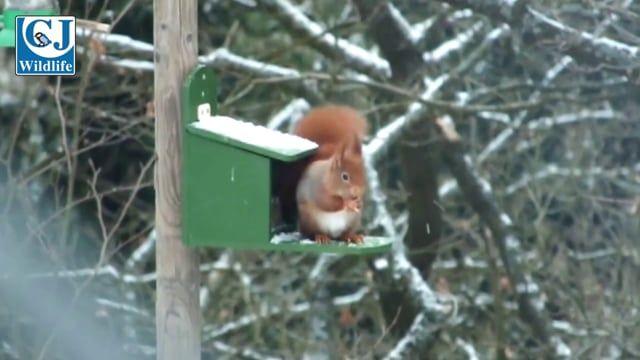 Squirrel Blend