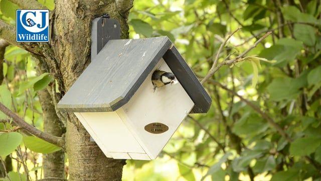 Zurich 32mm Nest Box