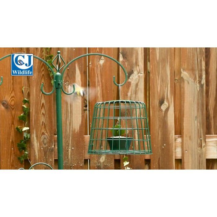 Suet Pellet & Mealworm Bird Feeder Guardian