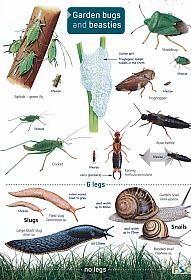 Garden Bugs and Beasties