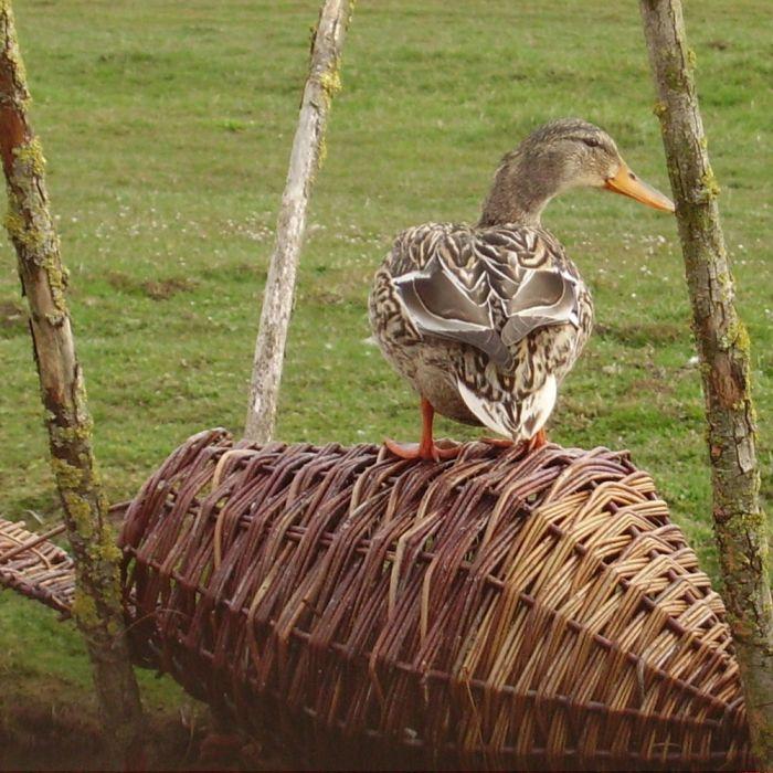 Round Duck Basket