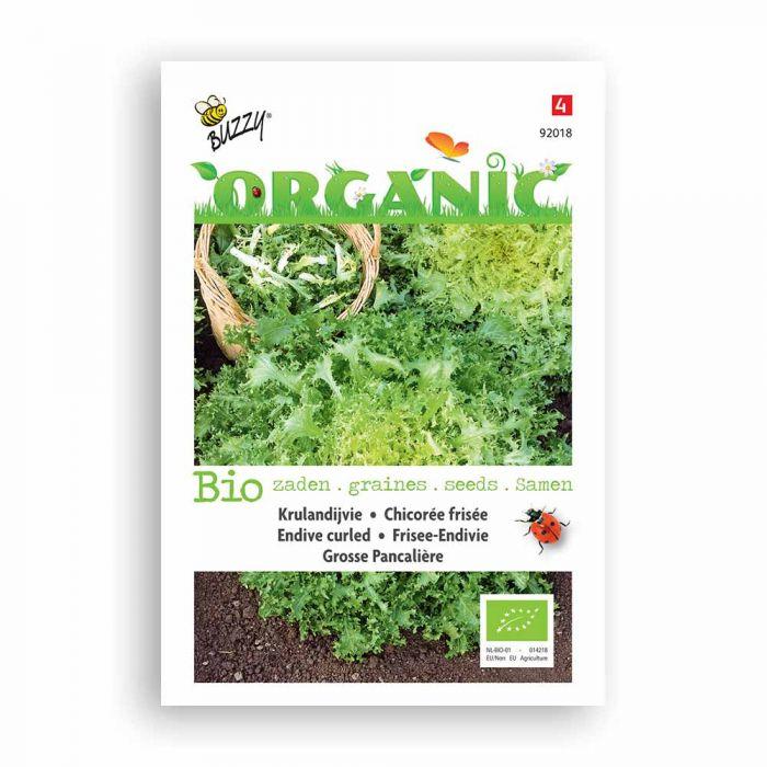 Buzzy® Organic Endive - Grosse Pancalière